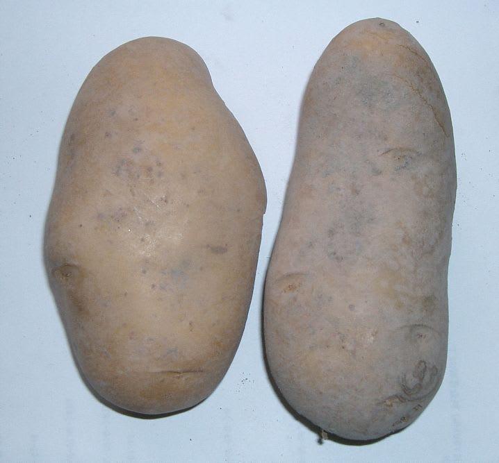 Solanum_tuberosum_021