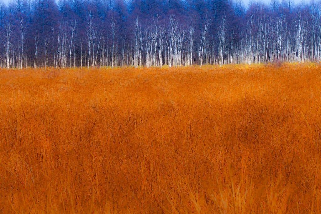 小田代原の草紅葉の写真