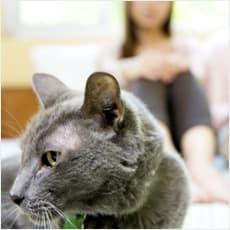 「猫は空気を読むって本当? ←この記事どう」の質問画像