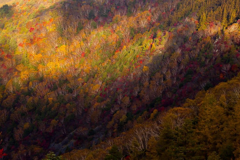 美ヶ原の紅葉