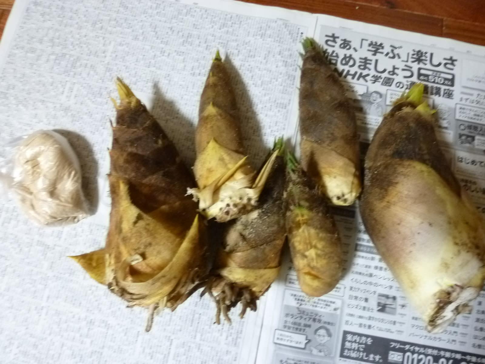 竹の子の画像