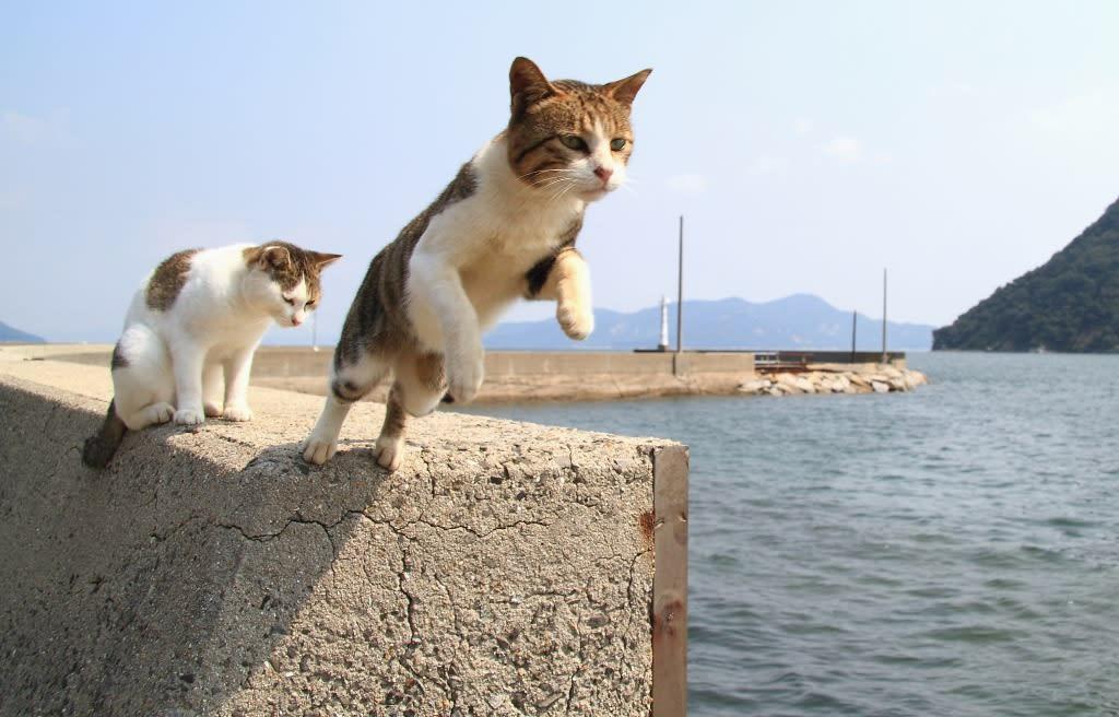 更に他の猫たちも華麗なジャンプを魅せてくれます。