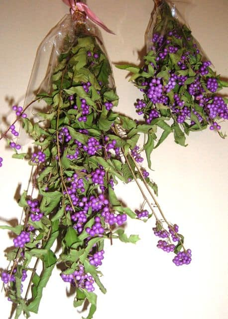 紫式部 花 ドライ フラワー