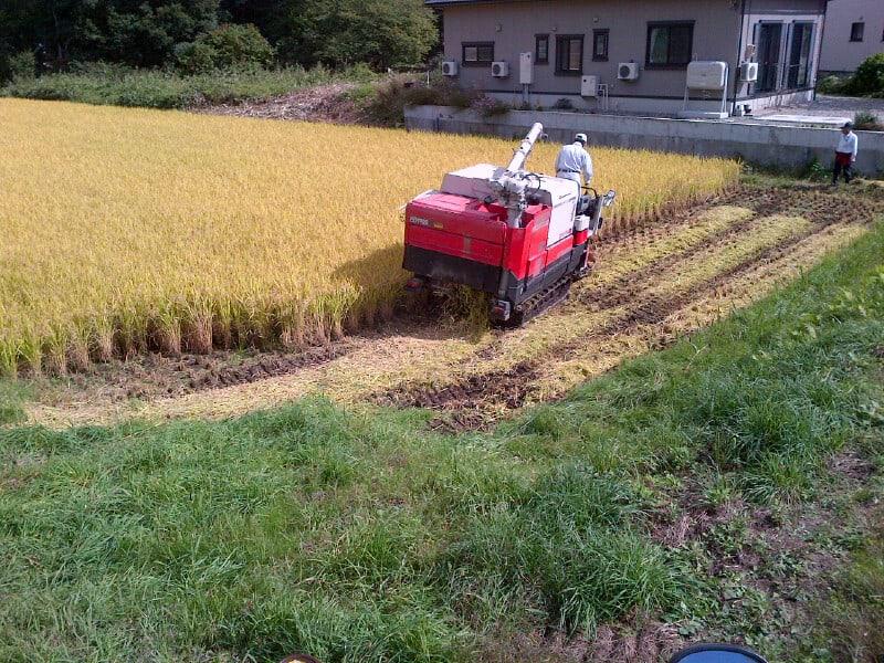 稲刈り最終日