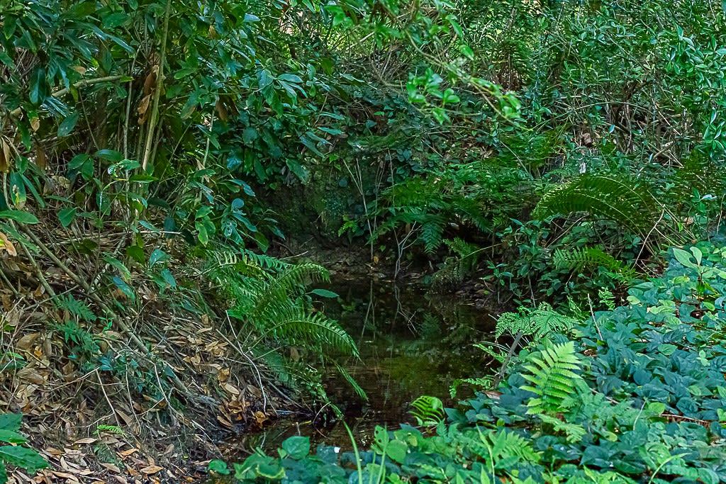 ハネビロエゾトンボの生息環境写真