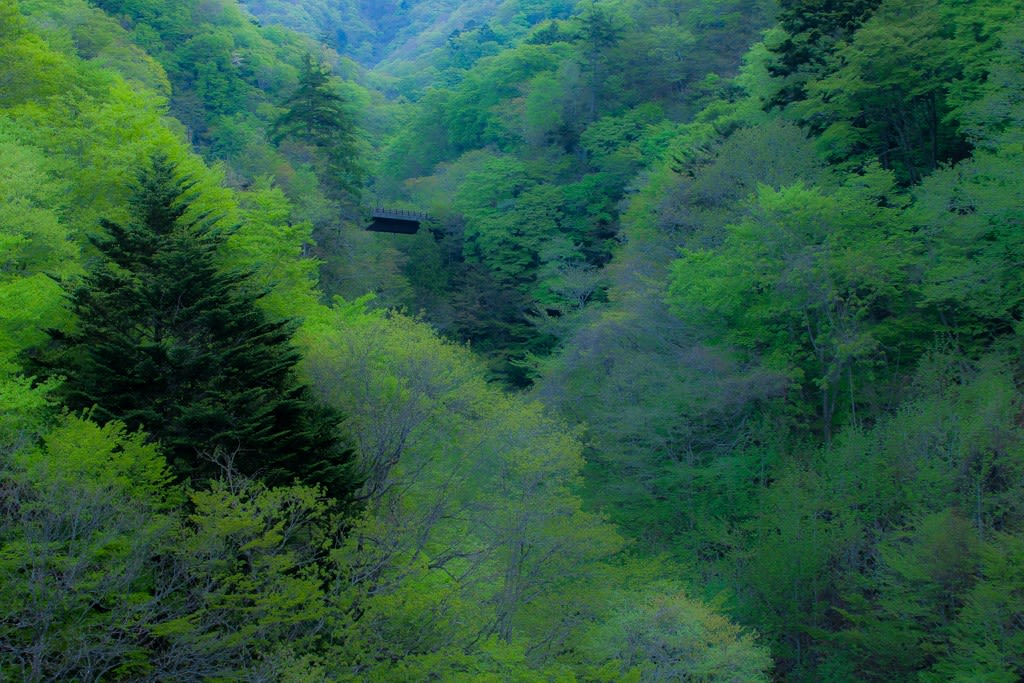 奥四万湖の新緑の写真
