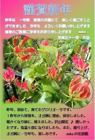 nokoの花図鑑