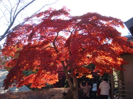 紅葉の苔庭その4