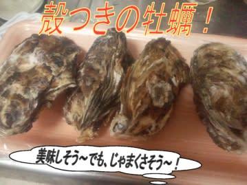 剥き 牡蠣 方 の