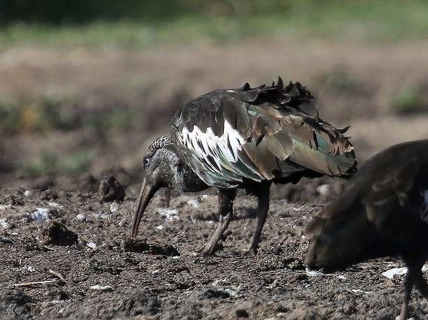 森の自然誌:野鳥:野鳥リスト:...