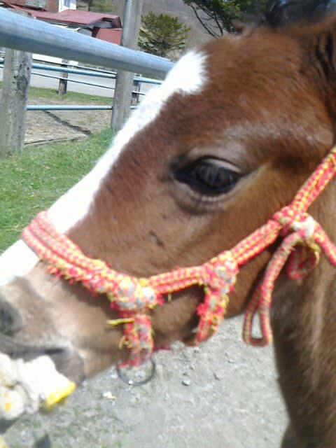 子馬はかわいい 牧場の日記競走馬生産者の日々