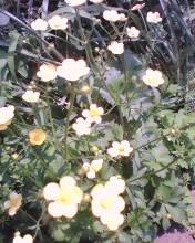 2008_0428_474