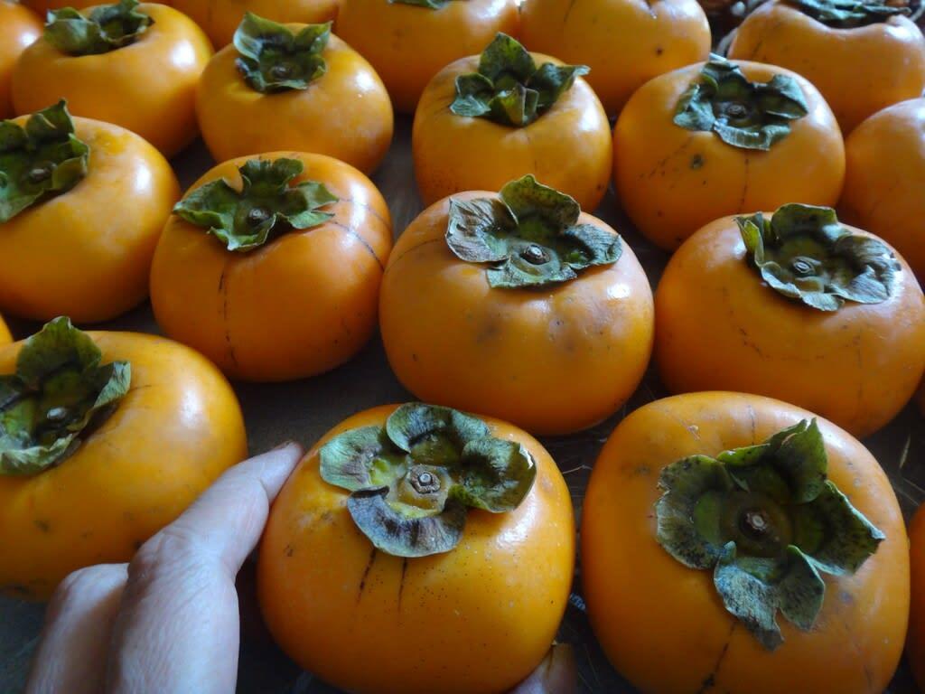 佐渡の八珍柿