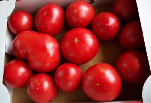 ソース トマト 大量 消費