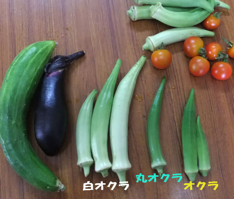 Okura110718570