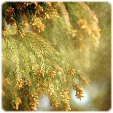 「今年もアレの季節です。~花粉症対策はお早」の質問画像