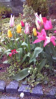 何時になれば春がくるのでしょうか?