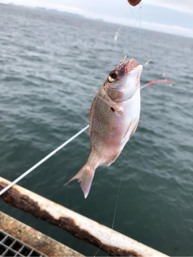 豊浜 海 釣り 公園 【愛知県釣りポイント】豊浜漁港、豊浜海釣り公園2021年2月中旬