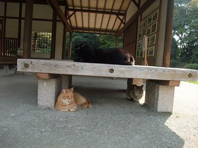 ここにも猫が
