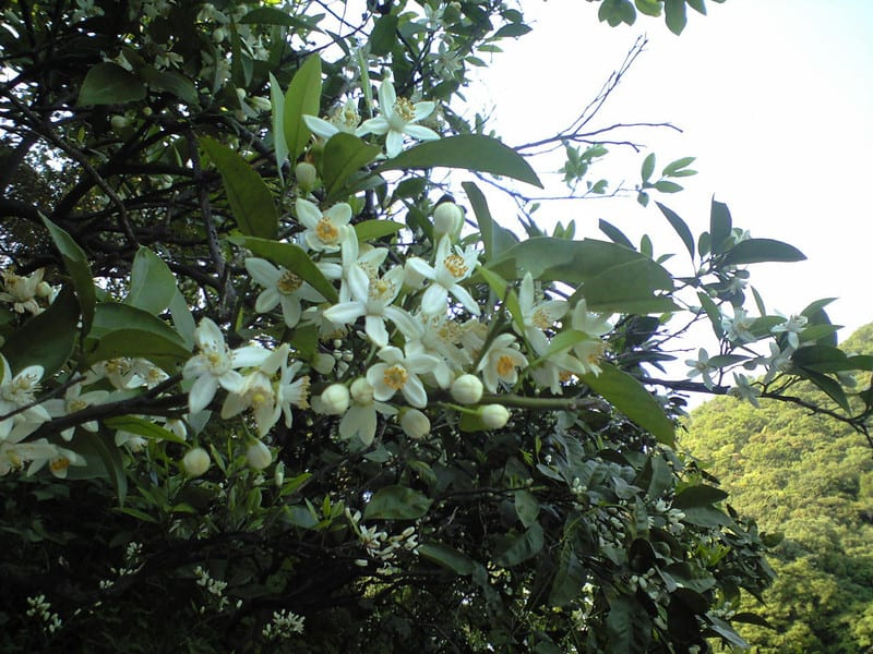 瀬戸内の花