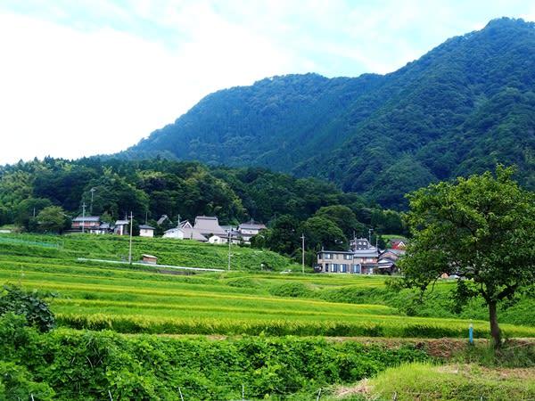 福井県・高浜町の「今寺の棚田」 - BLOG 日本棚田巡り