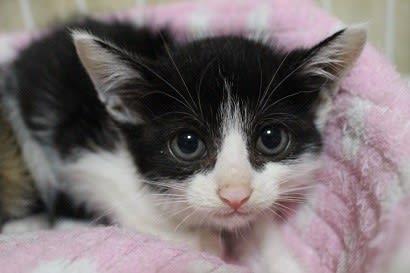 生後約1ヵ月半の子猫4匹