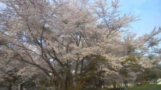 花吹雪の雪窓公園(  続)