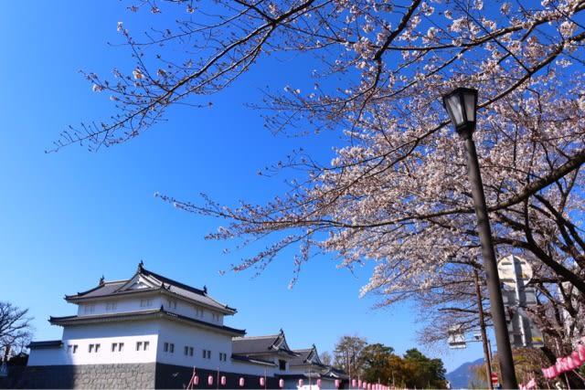 今年の桜は色が薄い?! - JUNのゴールデンレトリバーと行く遊車旅行