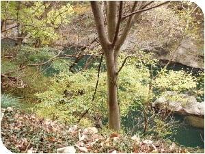 青い水と紅葉の葉が綺麗にマッチ