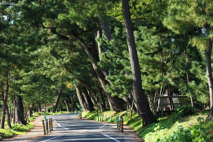 東海道御油の松並木