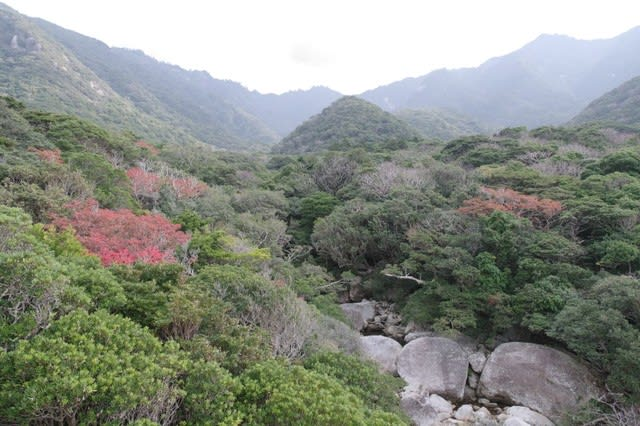 屋久島世界自然遺産の森