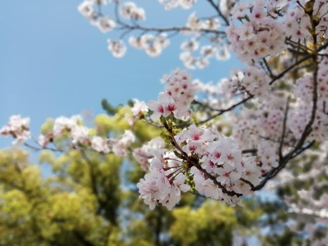 北海道 札幌 空手 住吉大社「五、大、力」