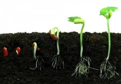 蒔かない種に芽は生えない - 事業承継コンサルタント 佐原啓泰のブログ