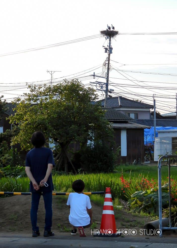 コウノトリの営巣 - 福井県坂井市三国町平野写真館から ...