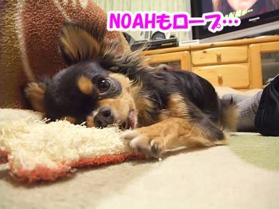 https://blogimg.goo.ne.jp/user_image/72/ab/993b7f7cae0e35caa6225d5175bcaaf7.jpg