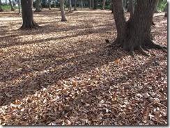 (1) 落葉に敷きつめられた「独歩の森」