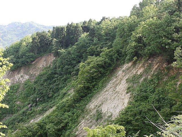 中越地震復興「寅太の山野草」