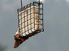 小鳥のためのスェット。 クリックでウィキのページに行きます