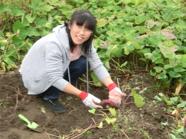イモ掘り2