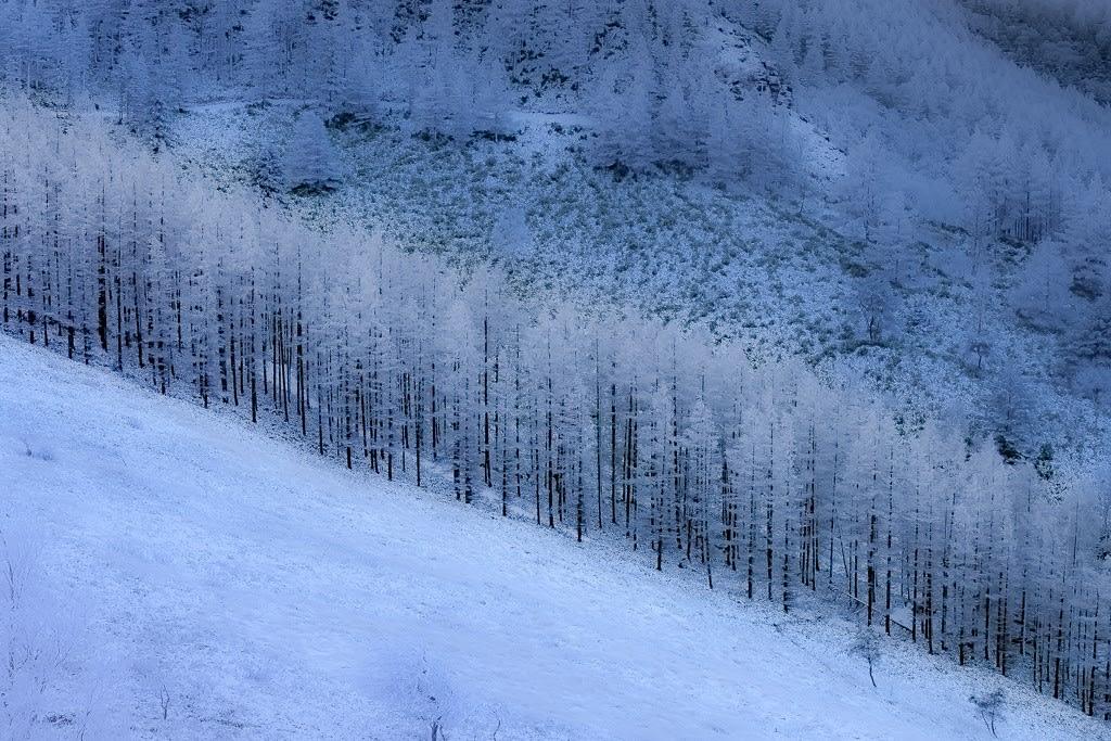 霧氷の写真