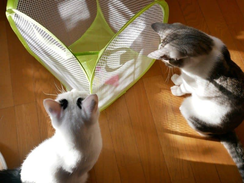 やすあがりの猫たち(^◇^)