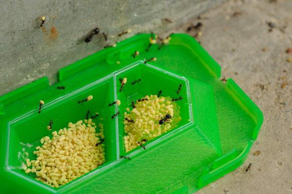 巣 の スーパー コロリ アリ 「スーパー・アリの巣コロリ」に思うこと。
