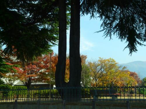 県の森公園(あがたのもりこうえん)の紅葉
