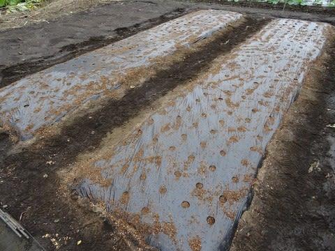 サラダ野菜の覆土を培養土で - ...