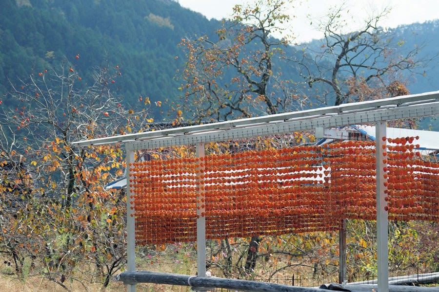 柿暖簾と秋の野