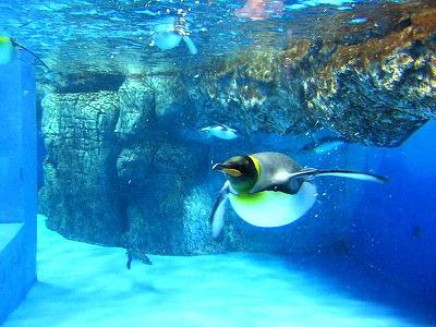 キングの潜水あで姿 - ペンギン事務所
