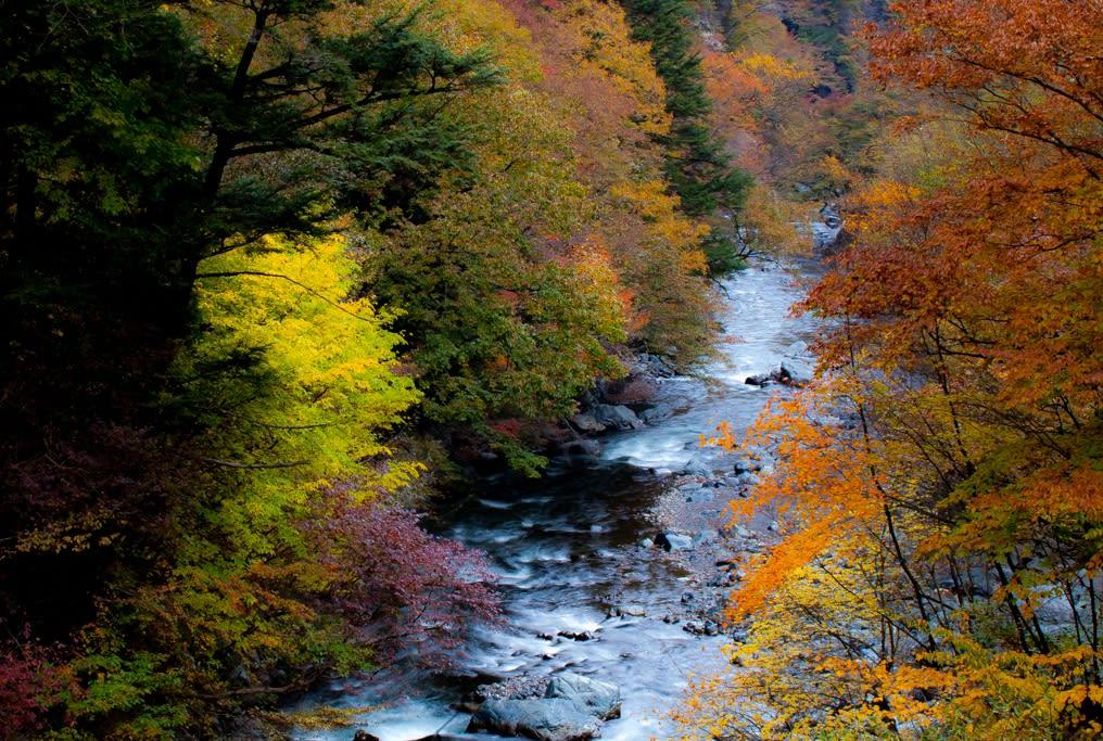 氷川渓谷の紅葉