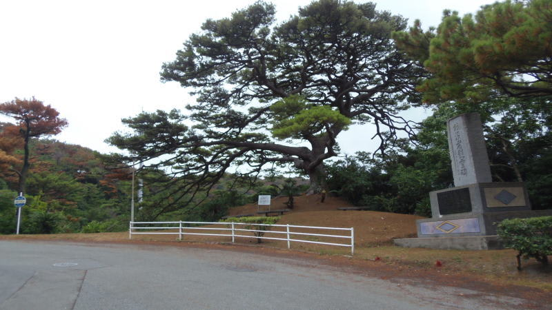 130817_pine
