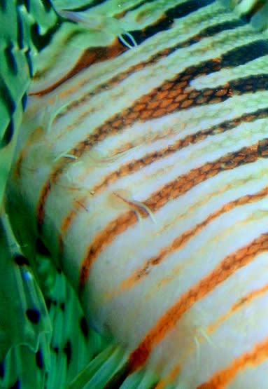 Minokasagonikiseisurukaiasiruinoiss