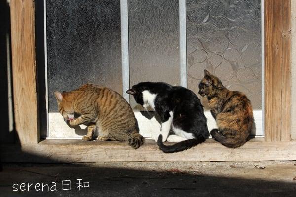 「セレナ日和日間賀島シンクロ」の画像検索結果